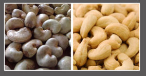 cashews before and after shelling